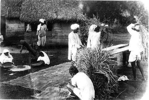 amerindian legacies in the caribbean